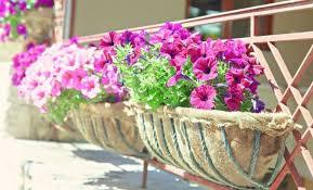 Правила озеленения балкона | Цветы в доме (Усадьба)