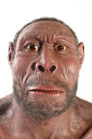 Pidió permiso a su padre Anu para acelerar el proceso de evolución y trabajar en la genética del homo erectus, extrayendo espermas de esta especie los ... - homo_erectus