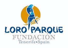 Image result for loro parque fundacion