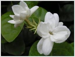 Hasil gambar untuk bunga