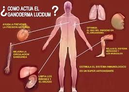 Resultado de imagen para ganoderma y la presion arterial