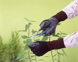 SHOWA 262 <b>Breathable Anti Slip</b> Coating Glove Long Sleeve (10 ...
