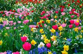 information technolgy   health   education  entertainment  current    mostly people like to wear colorful dresses in spring  a special event  d     basant     held in pakistan just in spring season