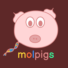 The molpigs Podcast