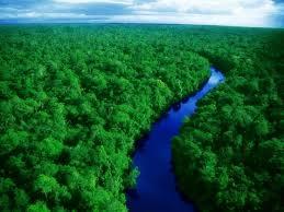 Risultati immagini per amazzonia