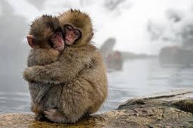 「サル」の画像検索結果