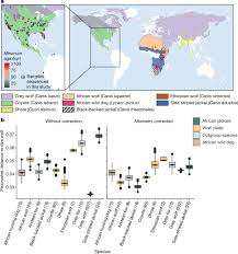 Dire wolves were the last of an <b>ancient</b> New World canid lineage ...