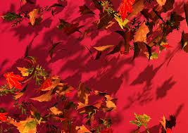 Pdf med höstens utbud