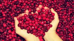 Αποτέλεσμα εικόνας για Cranberry ή οξύκοκκο