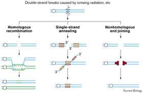 <b>DNA double</b>-strand break repair: Current <b>Biology</b>