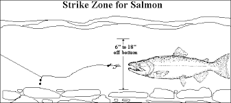 Image result for king salmon techniques fishing pics