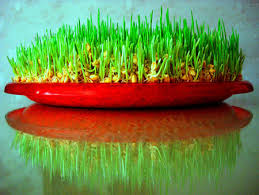 Image result for novruz bayrami