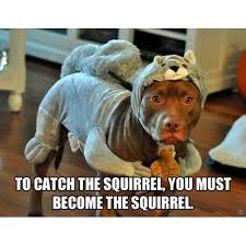 Trending Current Events — #squirrel #squirrels #dog #dogs #pitbull ... via Relatably.com