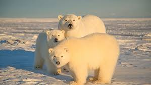 Are <b>cats and dogs</b> left-handed? Do polar bears put their paw over ...