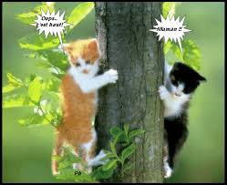 """Résultat de recherche d'images pour """"gifs de chats rigolos"""""""