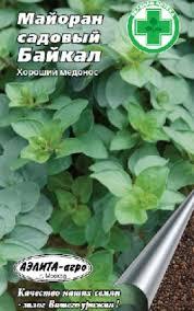 <b>Семена майорана</b> садового «<b>Байкал</b>»