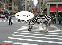 Image result for تصاویر خنده دار