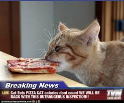 Cute CAT pics - These Breaking News cat memes are hilarious! #11... via Relatably.com
