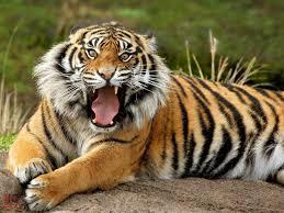 صور حيوانات متوحشة images?q=tbn:ANd9GcS