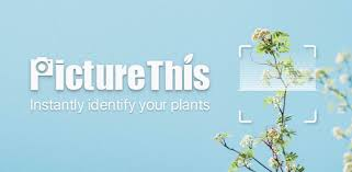 PictureThis: Identify Plant, Flower, Weed and More - Apps on Google ...