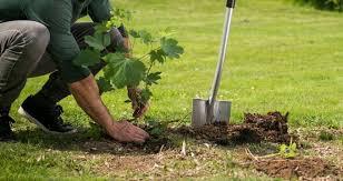 <b>Садовые лопаты</b>