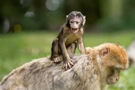 Monkey Day in 2019/2020 - When, Where, Why, How is Celebrated?