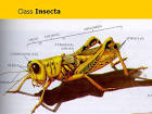Images & Illustrations of class Insecta