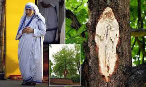Exposed wood bears likeness to Mother Theresa | Daily Mail Online