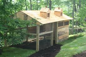 Raising Ducks for Preppers   American Preppers Network   American    Freedom Preppers Duck House