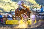 Images & Illustrations of bucking bronco