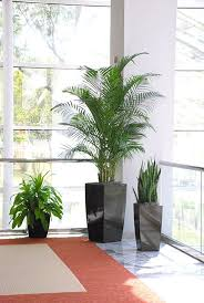 interior plants in medical facilities create a healthy feel living plants in a doctors office artificial plants for office decor