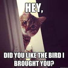 Concerned Cat memes | quickmeme via Relatably.com