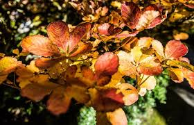 Enjoy the <b>colors</b> and activities of fall at festivals in Carnation and the ...