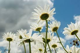 Afbeeldingsresultaat voor maand juni bloemen