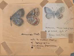 vladimir nabokov s scientific butterfly illustrations fine lines vladimir nabokov s scientific art