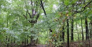 صور غابات روووعة images?q=tbn:ANd9GcT