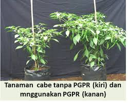 Image result for pgpr