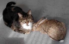 Cats and <b>Rabbits</b>