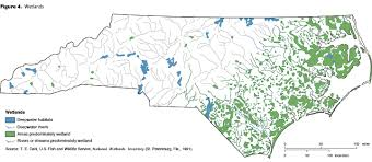 Image result for North Carolina salt marsh wetlands