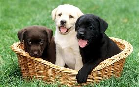 Image result for puppies