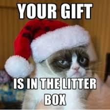Grumpy cat on Pinterest   Grumpy Cat Meme, Grumpy Cat Quotes and ... via Relatably.com