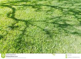 Image result for outdoor shadow