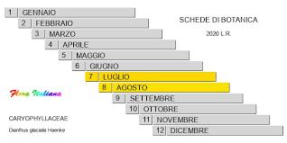 Dianthus glacialis [Garofano alpino] - Flora Italiana