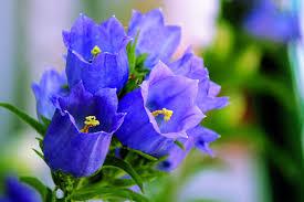 「花」的圖片搜尋結果