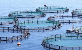 Image result for fish farming in china