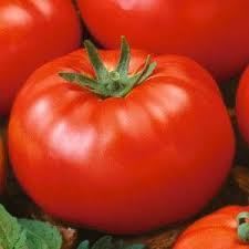 Image result for beefsteak tomatoes public domain