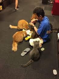 ua megacity tokyo cats are the human s friend or family this photo is i took in the cat cafe that a mid age male feeding the cat a lot of cat around him