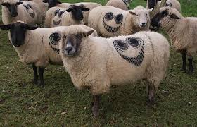 We are the Sheeple by Marcus Curtis Images?q=tbn:ANd9GcT1Bwe6FH1FpF4XO2bkcbCVLzw80nR0G0m0oweTeLOsIWVyXz_G