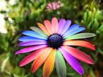 Images & Illustrations of flower