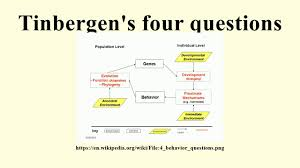tinbergen s four questions tinbergen s four questions